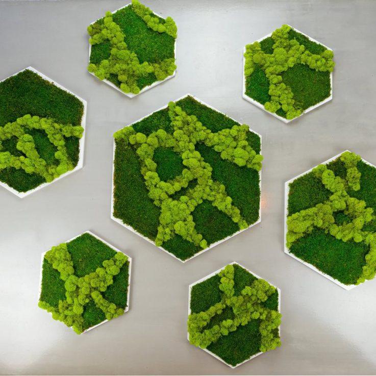 Moss Wall Frameless Preserved moss Custom Plant wall decor Plant wall art Moss wall art Honeycomb