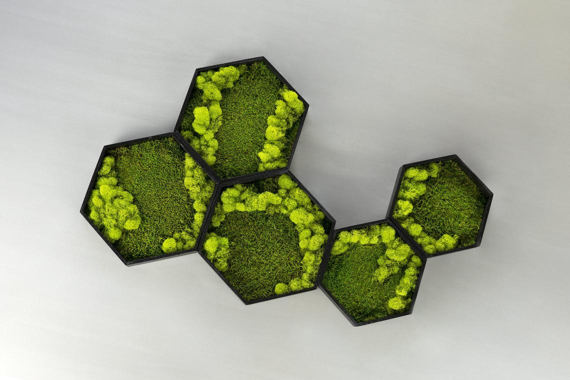 Mosswerk Moss Wall Art Storepreneur Com