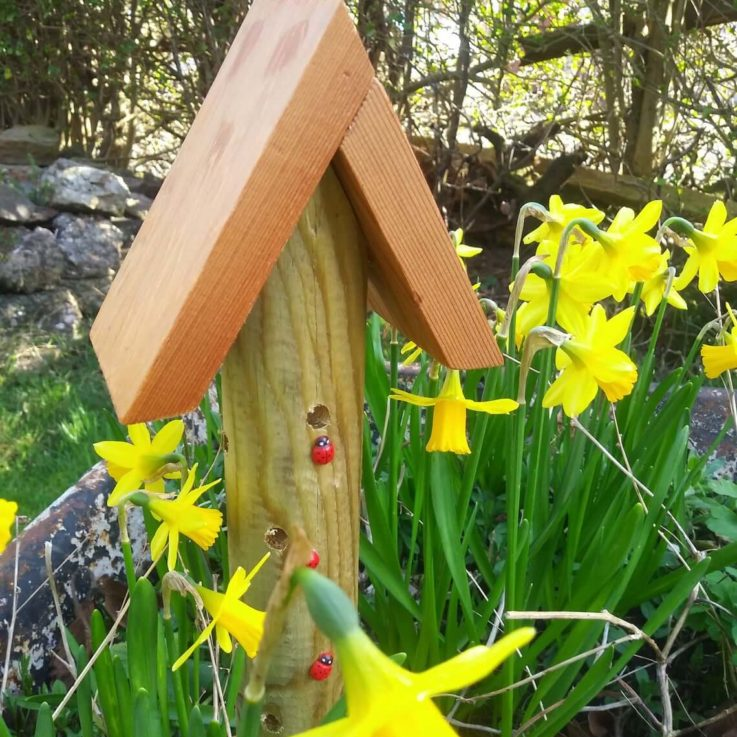 Ornamental - Rustic -Wooden - Garden - Bug House -Decorated with Ladybirds