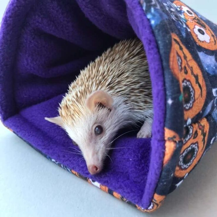 Pumpkin Halloween cosy snuggle cave. Padded stay open snuggle sack. Hedgehog bed. Fleece pet bedding.