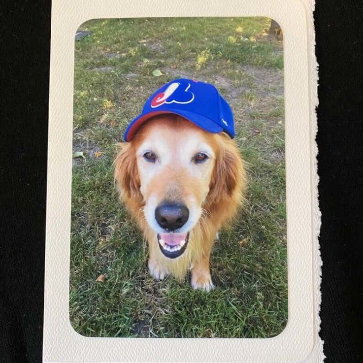 Bring Back the Expos! Dog greeting card