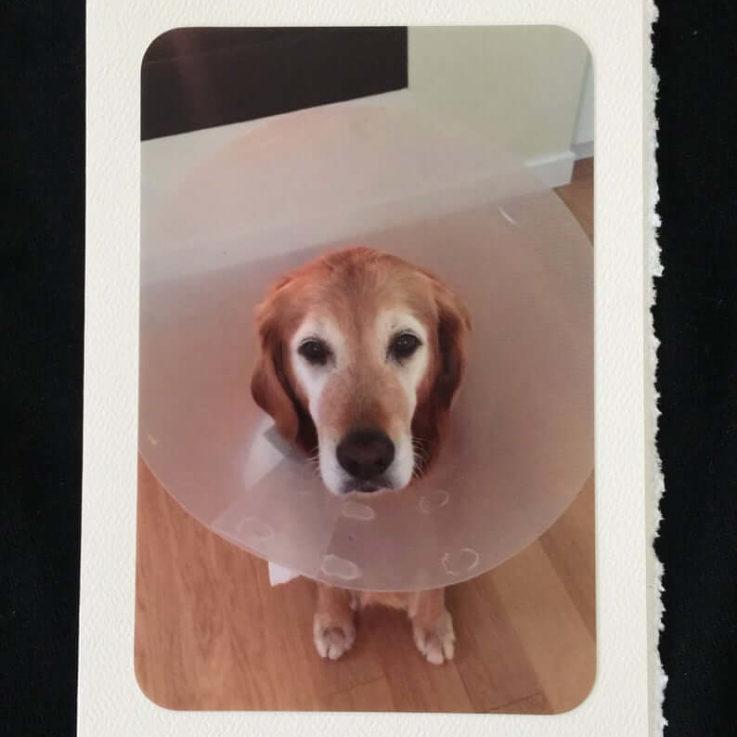 Cone of Shame photo greeting card