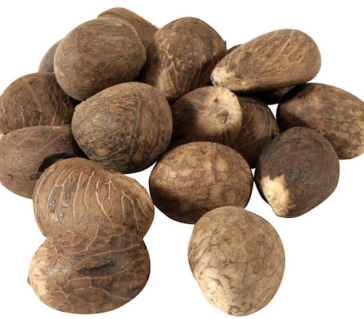 Fair Trade Tagua Nuts LARGE - Vegetable Ivory - Ecuador Amazonian Nut size