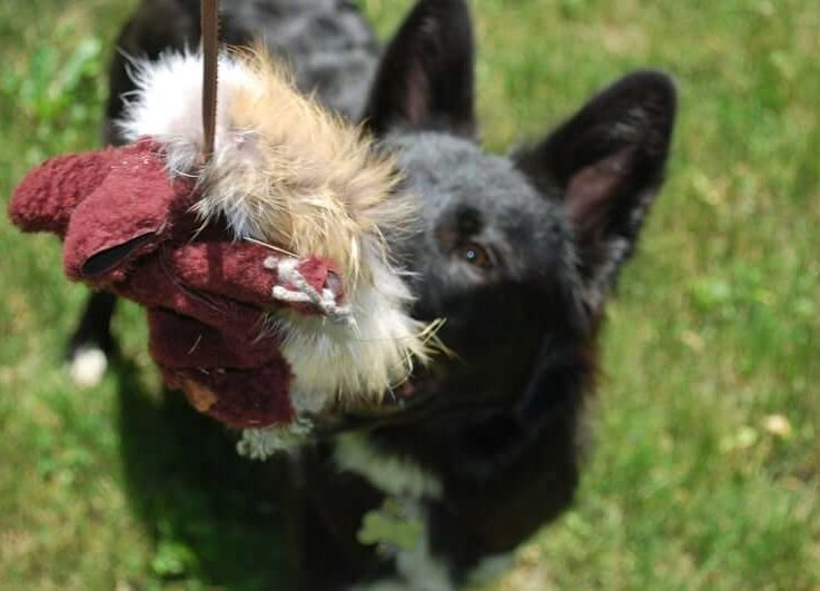 That's One Twisted SquirrelSheepskin and Fur Hunting Instinct Toy for Dogs and Cats